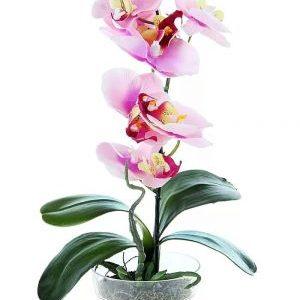 Все для орхидей