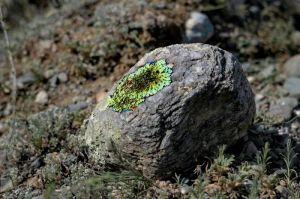Защита от грибка, плесени , бактерий, лишайника, мхов