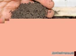 Измеритель кислотности почвы