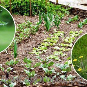 Гербициды Средства от сорняков